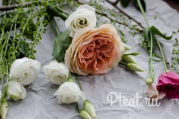 Шоколадная роза Остина
