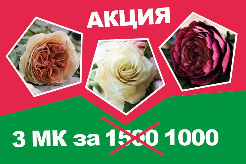 3 МК в 1 (роза, роза Остина, пион)